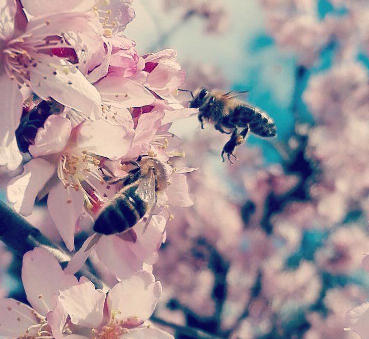 Wir müssen etwas tun. Rettet die Bienen!